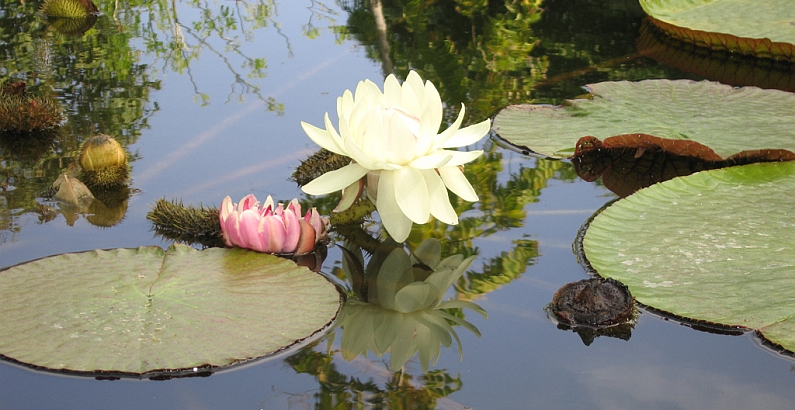 Meditationen im Prana Zentrum Leonberg